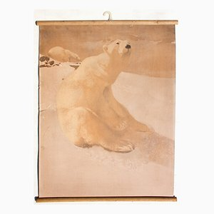 Lithograph Educational Chart of a Polar Bear by Karl Jansky, 1914