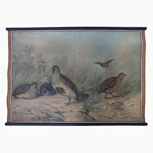 Rebhuhn und Wachtel Wandplakat von Karl Jansky, 1897