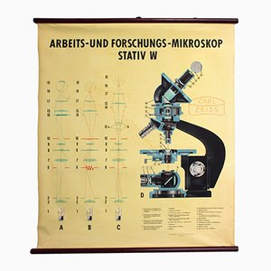 Tableau Mural du Microscope de Carl Zeiss, 1949