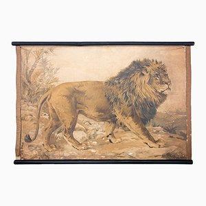 Tableau Éducatif Lithographique d'un Lion par Karl Jansky, 1897
