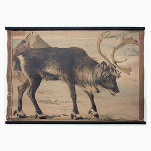 Lithograph Educational Chart of a Reindeer by Karl Jansky, 1897