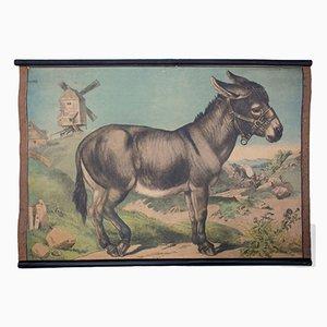 Póster educativo con litografía de burro de Karl Jansky, 1897