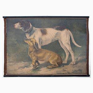 Póster educativo con litografía de perro de Karl Jansky, 1897