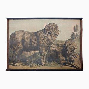 Tableau Éducatif Lithographique d'un Chevreuil par Karl Jansky, 1897