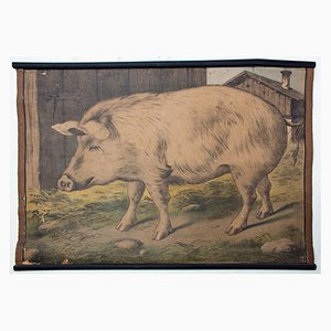 Tableau Éducatif Lithographique d'un Cochon par Karl Jansky, 1897