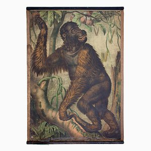 Lithograph Educational Chart of an Orangutan by Karl Jansky, 1897