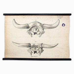 Póster sobre ganadería de Hermann von Nathusius, 1858