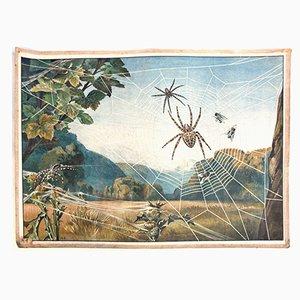 Póster educativo con arañas de Meinolds Wandbilder, 1918