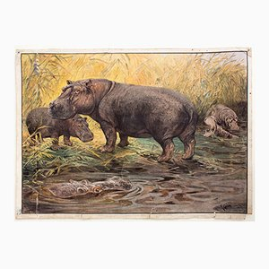 Educational Wall Chart of Hippos by A. Weber for C. C. Meinhold & Söhne, 1891