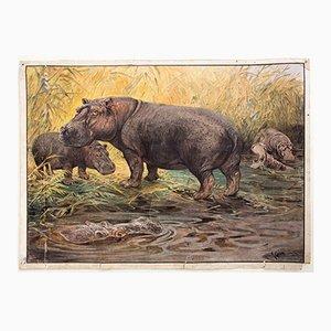 Stampa educativa rappresentante ippopotami di A. Weber per C.C. Meinhold & Söhne, 1891