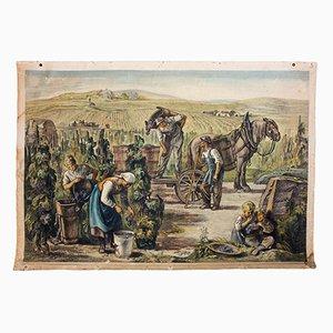 Póster de la recolección de uva,1922