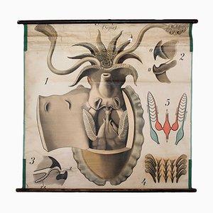 Póster vintage de un mejillón de Paul Pfurtscheller para Martinus Nijhoff, años 20