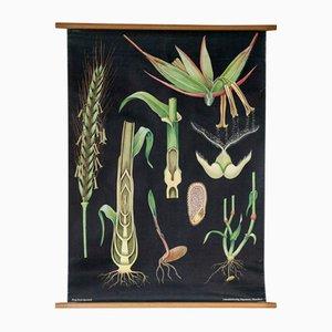 Tableau Mural Botanique par Jung, Koch & Quentell pour Hagemann, 1960s