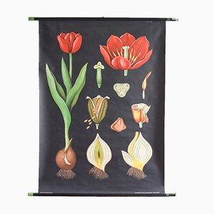 Póster escolar con tulipán vintage de Jung, Koch, & Quentell para Hagemann, 1963