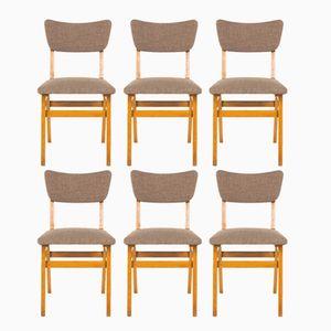 Französische Eichenholz Stühle, 1950er, 6er Set