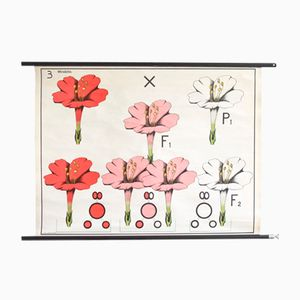 Botanical Classroom Poster for Hagemann, 1960s