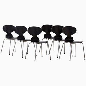 Sillas Ant de Arne Jacobsen, 1952. Juego de 6