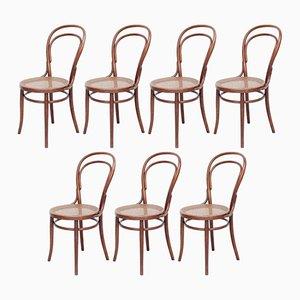 Bugholz Stühle von Türpe, 1900er, 7er Set