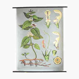 Vintage Botanical Poster by Jung, Koch, & Quentell for Hagemann