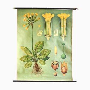 Botanisches Vintage Poster von Jung, Koch, & Quentell für Hagemann