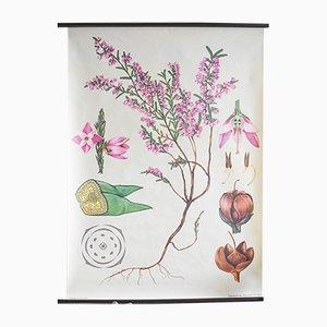 Póster botánico vintage de Jung, Koch, & Quentell para Hagemann