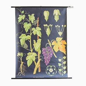 Botanisches Vintage Plakat von Jung, Koch & Quentell für Hagemann, 1963
