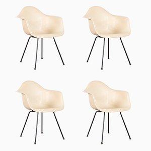 Sillas de comedor DAX de pergamino de Charles & Ray Eames para Herman Miller, años 50. Juego de 4