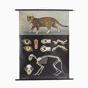 Vintage Plakat mit Katze von Jung, Koch & Quentell für Hagemann