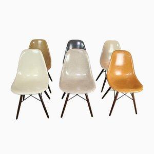 Sedie DSW vintage in fibra di vetro di Charles & Ray Eames per Herman Miller, set di 6