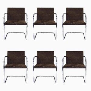 MR50 Brno Stühle aus Stahlrohr & Wildleder von Ludwig Mies van der Rohe für Knoll International, 1980er, 6er Set