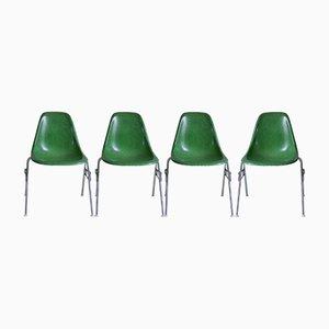 Sedie DSS in fibra di vetro di Charles & Ray Eames per Herman Miller, set di 4