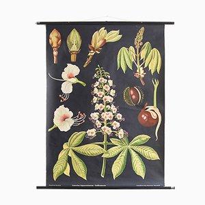 Poster botanico di Jung, Koch, & Quentell per Hagemann, anni '60