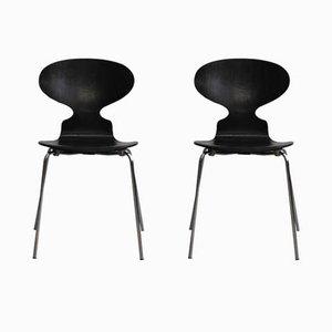 Sedie modello 3100 Ant vintage di Arne Jacobsen per Fitz Hansen, 1967, set di 2