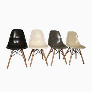 Juego de sillas 4 DSW de Charles & Ray Eames para Herman Miller, años 50