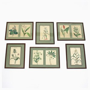 Framed Botanical Pictures, 1960s, Set of 6