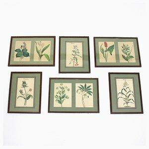 Ilustraciones botánicas con marco, años 60. Juego de 6