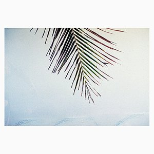 Honokowai Palms Print by Gutterdust