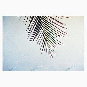 Impresión Honokowai Palms de Gutterdust