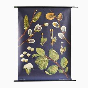 Affiche Botanique par Jung, Koch, & Quentell pour Hagemann, 1960s