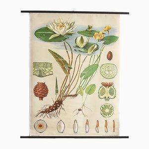 Impresión botánica de un nenúfar de Jung, Koch & Quentell para Hagemann, años 60