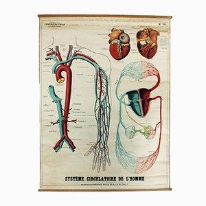 Stampa scolastica vintage di Gaston Bonnier