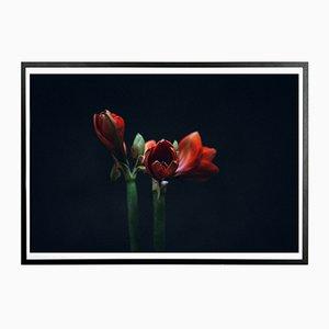 Dunkelroter Norph Kunstdruck von Applicata