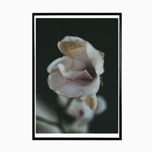 Magnolia Norph Kunstdruck von Applicata