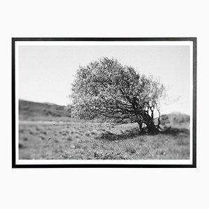 Baum im Wind Norph Kunstdruck von Applicata