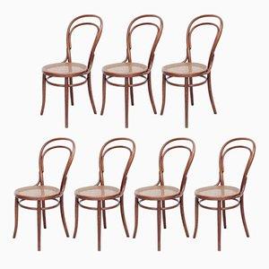 Antike Bugholz Stühle von Türpe, 1900er, 7er Set