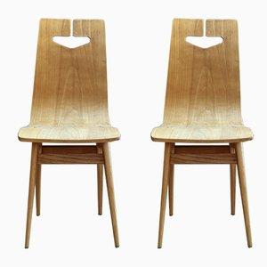 Modell 1329 Schichtholz & Eschenholz Furnier Esszimmerstühle von Rajmund Hałas für Bydgoskie Fabryki Mebli, 1960er, 2er Set