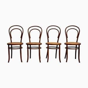 Antike österreichische Stühle von Fischel, 4er Set