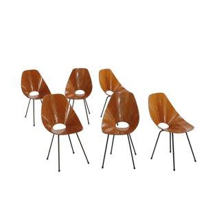 Medea Chairs von Vittorio Nobili für Fratelli Tagliabue, 1955, 6er Set