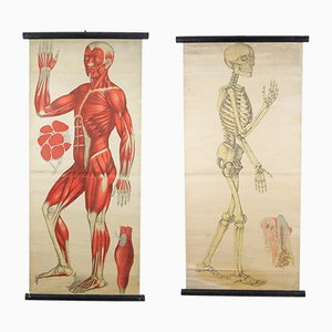 Antique Anatomical Charts by Foedisch Krantz for C. C. Meinhold & Söhne, Set of 2