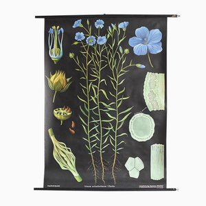 Botanical Poster by Jung, Koch, & Quentell for Hagemann, 1960s
